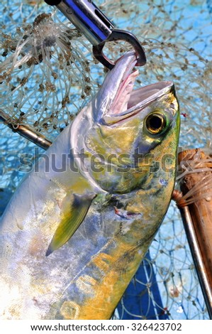 Queenfish in the hook and fishing net - stock photo