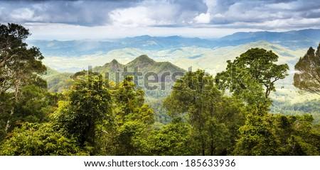 Queensland rainforest in the Gold Coast hinterland near Mount Warning, Australia - stock photo
