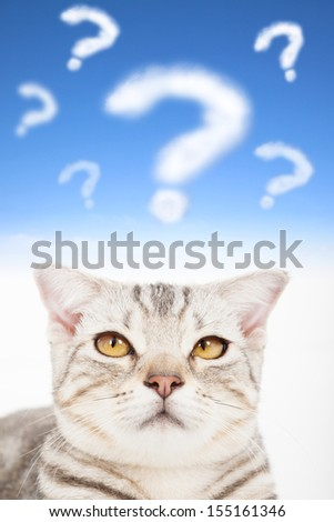 question mark with upset cat face - stock photo