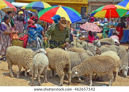 QUETZALTENANGO GUATEMALA APRIL 28 2016 : People sale sheeps Quetzaltenango maket. This native market is the most colorful in Central America