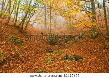 quiet autumn scene - stock photo