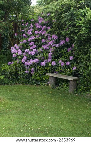 Quiet corner of garden with bench and flowering rhododendron. Jutland, Denmark - stock photo