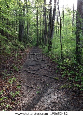 Quiet Walkway in Great Smoky Mountains National Park - stock photo