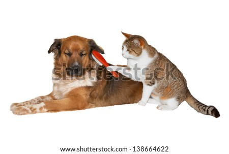 Quirky image of a pretty little cat with a red brush grooming its friend, a cute blissful brown crossbred dog lying basking in the attention with its eyes closed, isolated on white - stock photo