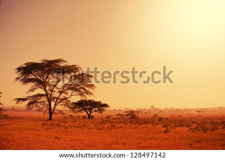 Quiver tree in Namibia, Africa - stock photo