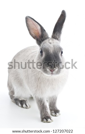 rabbit, - stock photo