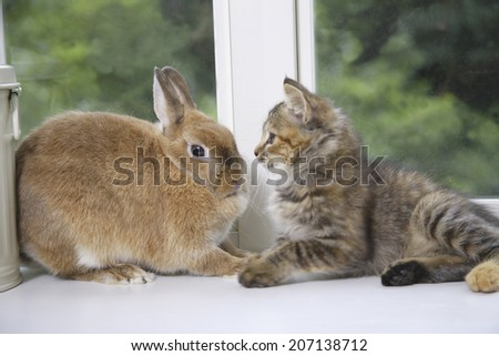 Rabbit And Cat Staring At Each Other - stock photo
