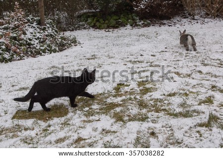 Rabbit and kitten playing on a snowy garden - stock photo