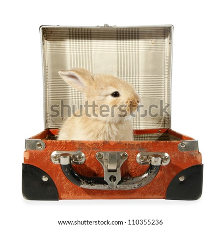 Rabbit baby bunny in old suitcase - stock photo