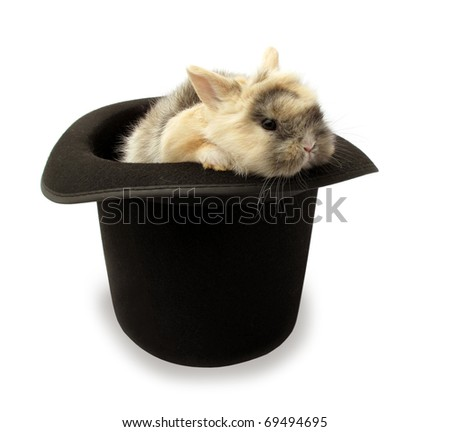 Rabbit bunny baby in top hat isolated