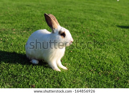 Rabbit in a green grass - stock photo