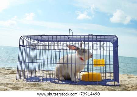 rabbit in a metal cage, hope to be release and get freedom - stock photo