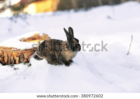 Rabbit in a winter forest - stock photo