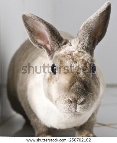 Rabbit in animal hospital - stock photo