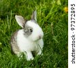rabbit in green grass in summer - stock photo