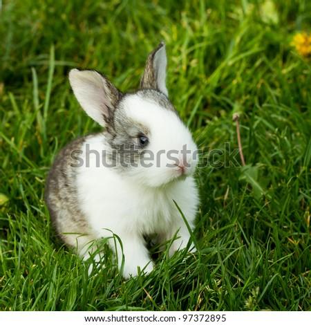 rabbit in green grass in summer - stock photo