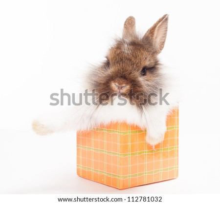 rabbit in red giftbox - stock photo