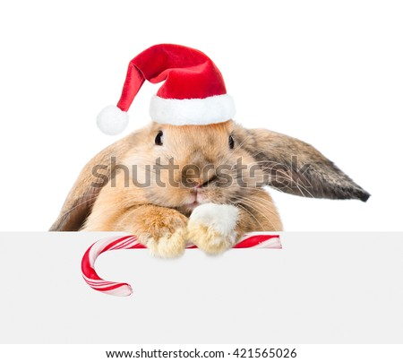 Rabbit in red santa hat looking over a signboard. Isolated on white background - stock photo