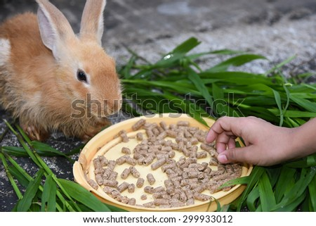 Rabbit is eating rabbit feed and grass. Little girl feeding her pet food with hand. - stock photo