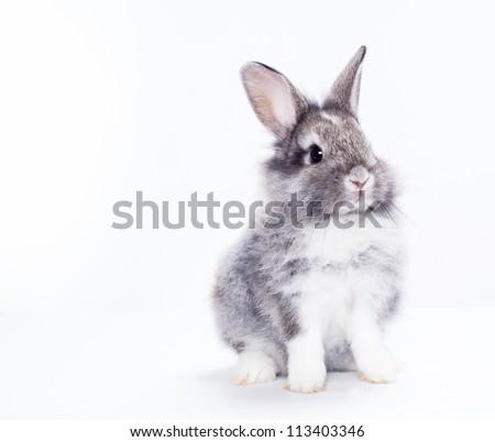 Rabbit isolated on a white background - stock photo