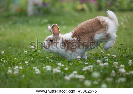 Rabbit jumping on the grass - stock photo