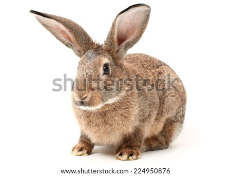 rabbit on a white background  - stock photo