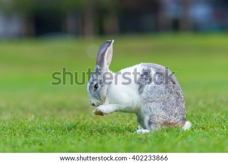 Rabbit on green grass in summer day.