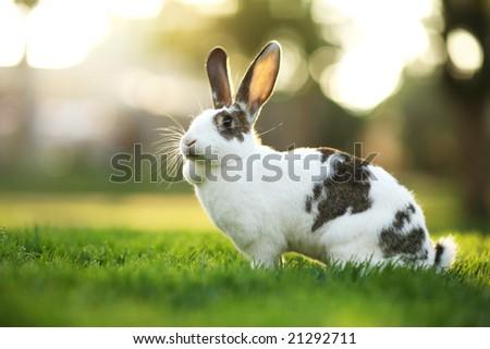 Rabbit on green grass. Shallow DOF. - stock photo
