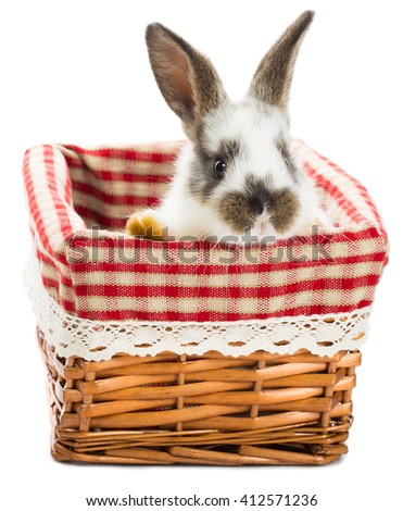 rabbit sitting in the basket, isolated on white - stock photo