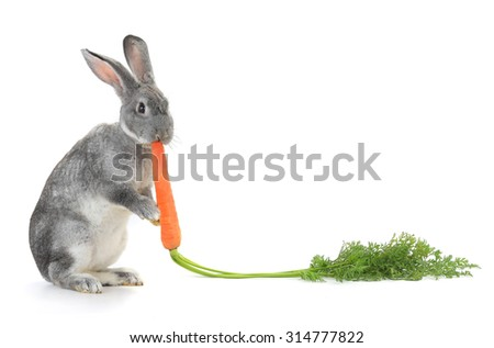 Rabbit with carrot isolated on white background - stock photo
