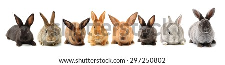 rabbits isolated on white background