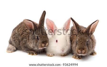 rabbits isolated on white background - stock photo
