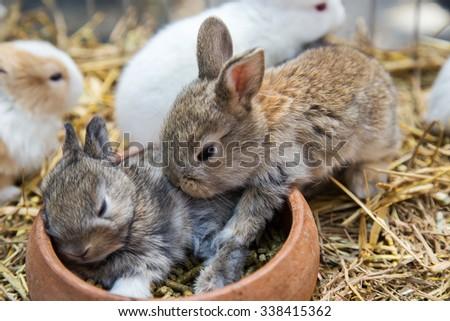 rabbits sleep - stock photo