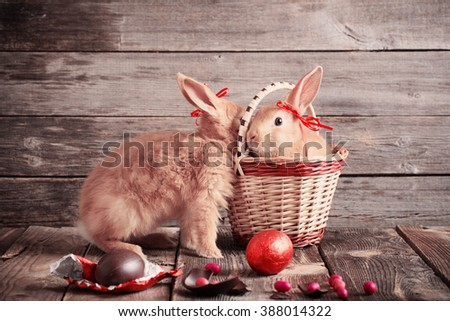 rabbits with chocolate eggs on wooden background - stock photo