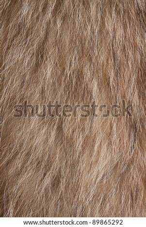 Raccoon dog fur. Useful as texture or background - stock photo