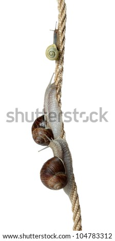 race of snails two climb a cord