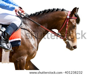 racing horse portrait isolated on white - stock photo