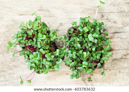 radish cress on wooden table, top view