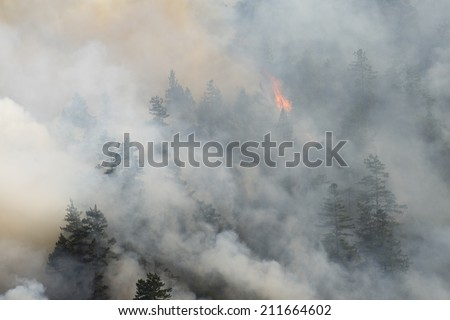 Raging forest fire, Northern California - stock photo