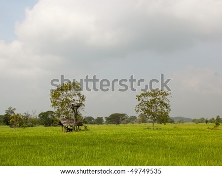 rain clouds gathering over a sri lankan landscape of rice fields and a tree house - stock photo