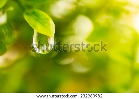 Rain drop on green leaf close up. green background - stock photo