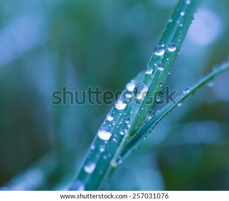 Rain droplets on grass leaf - stock photo