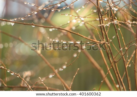 Rain drops on a branches. Shallow depth of field. Green background. Card with bokeh drops of dew on the branches of young tree after rain in fall. Abstract green nature background with chaotic stripes - stock photo