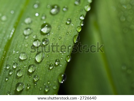 Rain drops on a leaf. Short depth of field. - stock photo