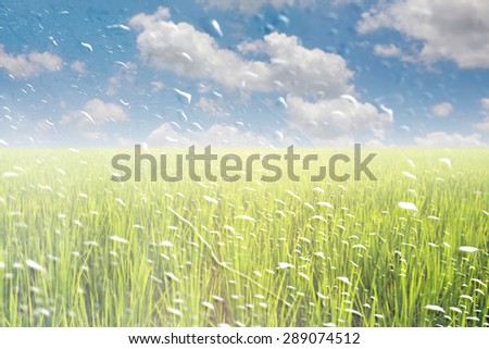 Rain drops on a window or water drops on grass blurred with green rice field and blue sky. - stock photo