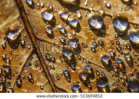 rain drops on an fall leaf