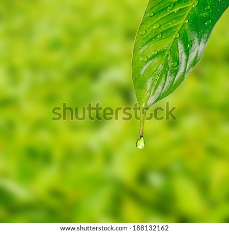 Rain drops on green leaf on a green background - stock photo