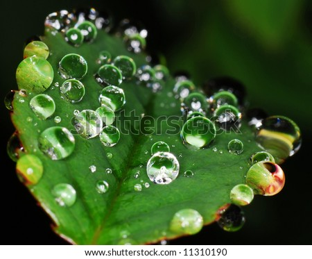 Rain drops on plant - stock photo