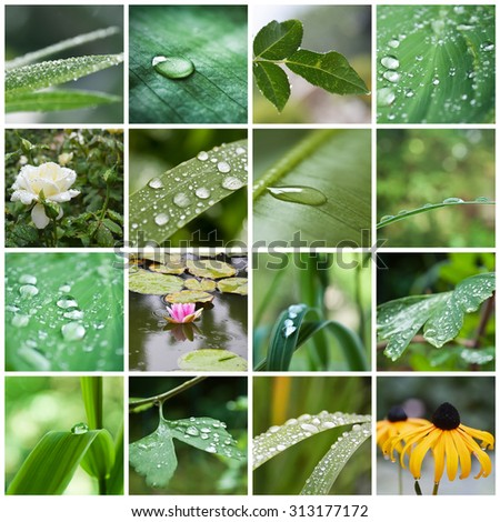 rain drops on plant and flowers collage