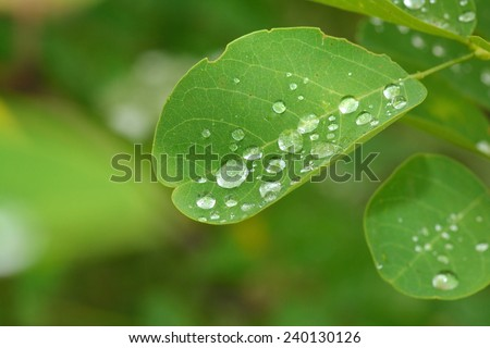 rain drops on the leaves - stock photo